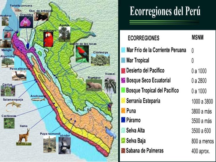 ecorregiones de perú