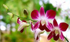Flora del Perú