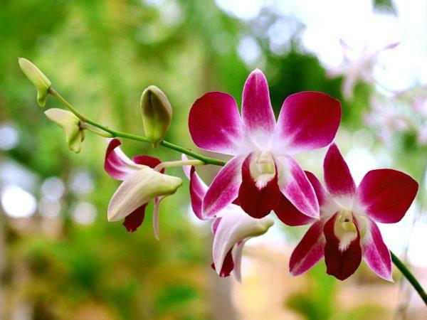flora de perú