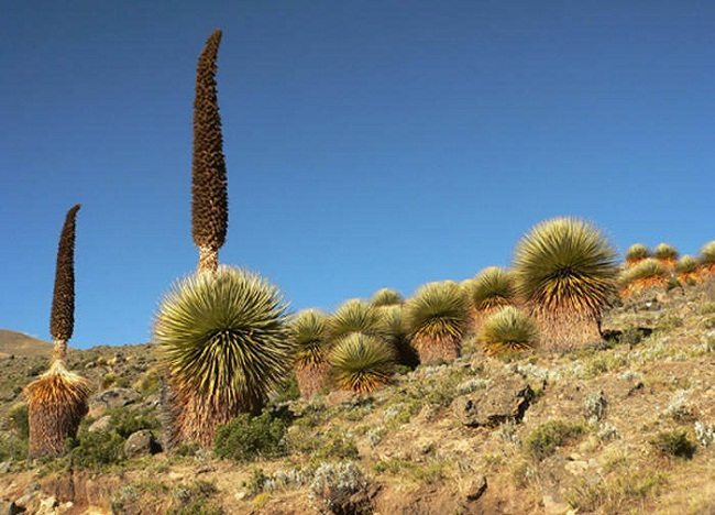 Plantas en peligro de extinción en el Perú