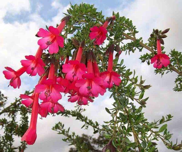 conoce las plantas nativas del perú